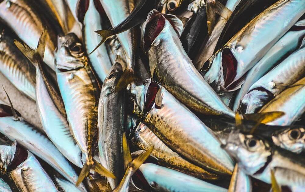 plástico en el pescado